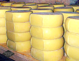 Fromage cascaval